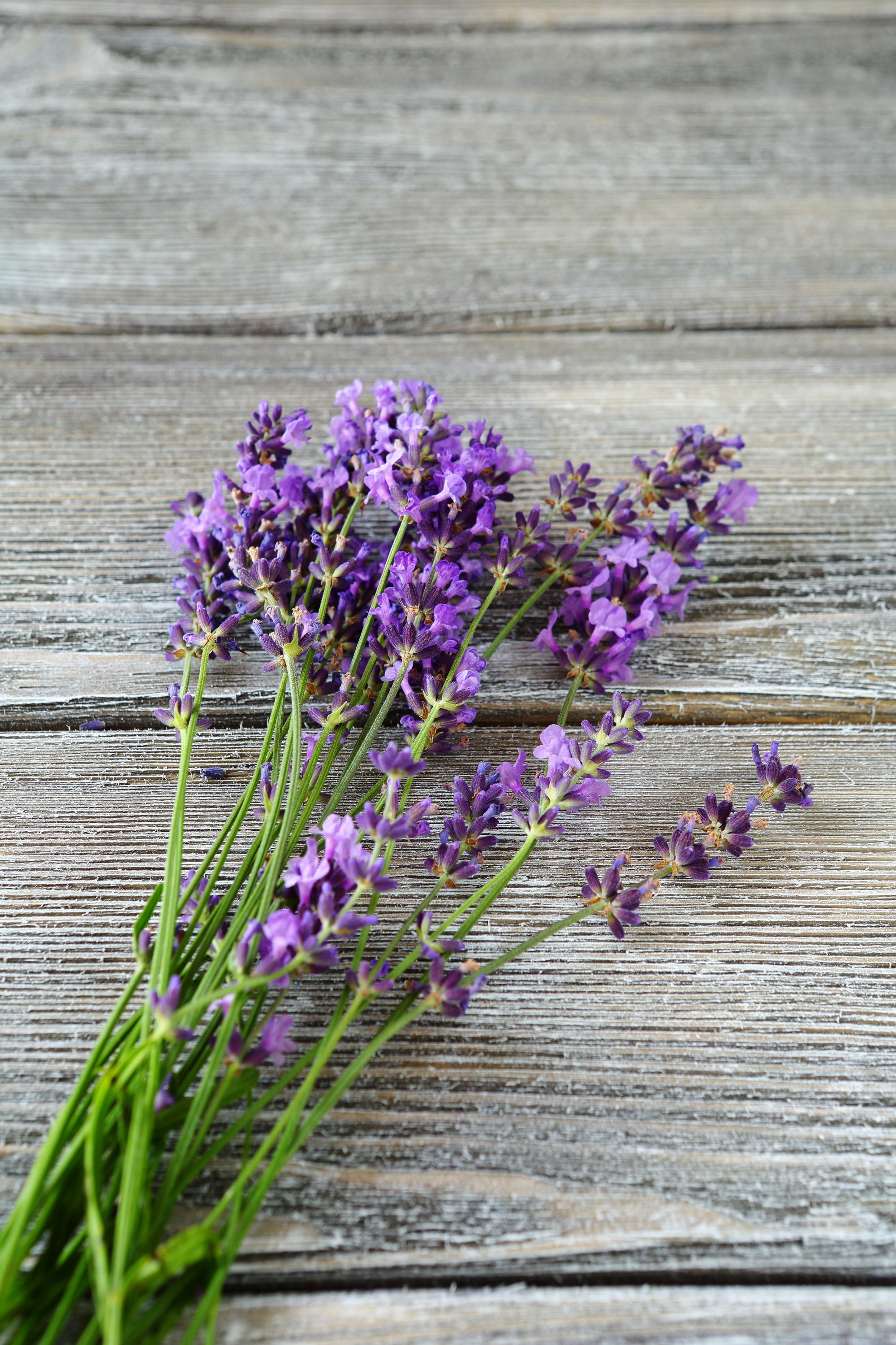 wedding send off ideas wedding send off ideas Either leave the stems as they are or take the flowers off distributing quantities in little bags or envelopes for guests A send off with lavender is